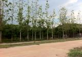Land in Hang Chat, Lampang - DDproperty.com