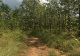 Land in Ko Kha, Lampang - DDproperty.com
