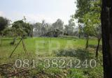 Land in Pak Chong, Nakhon Ratchasima - DDproperty.com