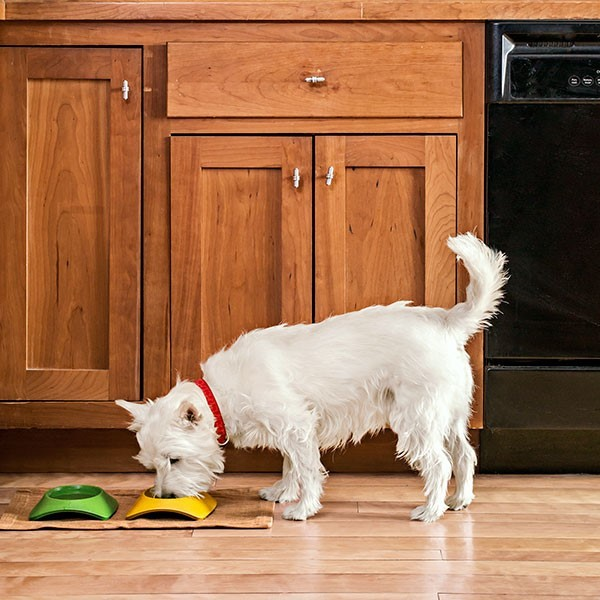 พื้นแบบไหนเหมาะสำหรับบ้านที่เลี้ยงน้องหมา?
