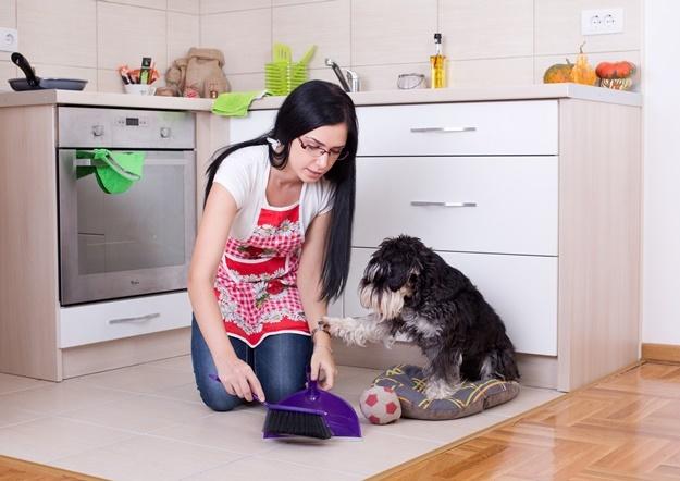 ทำความสะอาดบ้านฉบับคนรักสัตว์
