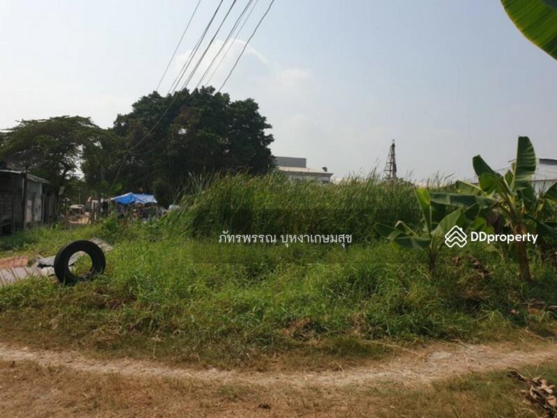 หมู่บ้านเอกวัฒนา พุทธมณฑล สาย 4 #73456913