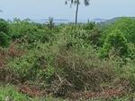 ขาย ที่ดิน  พิกัด บนเกาะสมุย - ขนาด 8 ไร่  52ลบติดต่อ0932181290เก๊ะ