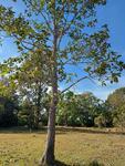 ขายที่ดิน แปลงสวย พท. 10 ไร่ #พื้นที่สีชมพู อ. กบินทร์บุรี จ. ปราจีนบุรี