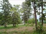 PIM 022   #เจ้าของขายเอง#   ขายที่สวน พร้อมบ้าน สวยมาก บรรยากาศธรรมชาติ อ. หนองสองห้อง จ. ขอนแก่น 40190