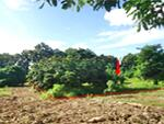 ขาย ที่ดิน  2 ไร่ 228 ตารางวา อ. เวียงสา จ. น่าน