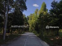 ขาย - ด่วน! ขายที่ดินบ้านในสวนแปลงสวย1 ไร่ 2. 29 ล้านในเกาะพะงัน ติดลำธาร